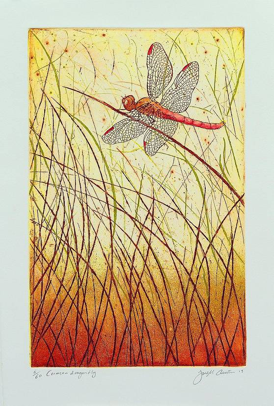 Joseph Austin - Crimson dragonfly