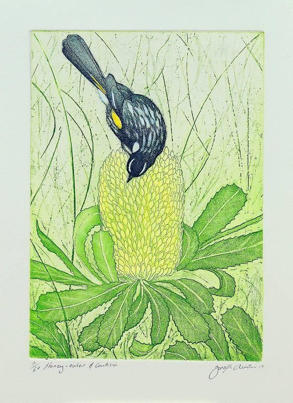 Joseph Austin - Honey Eater & Banksia