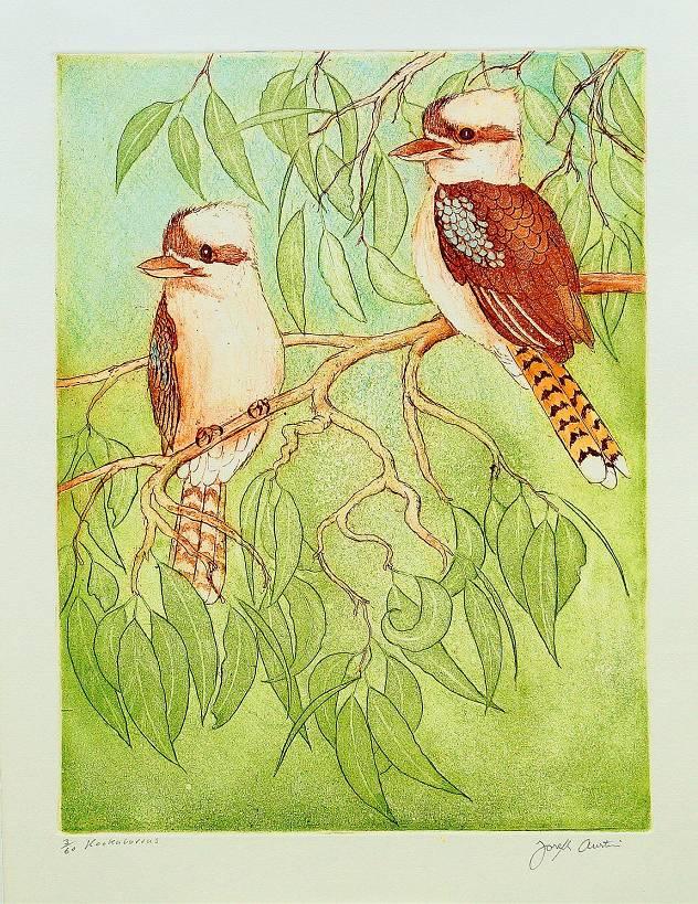 Joseph Austin - Kookaburras