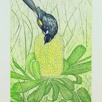 Joseph Austin - Honey Eater & Banksia