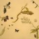 Cape York & Kangaloon Studies